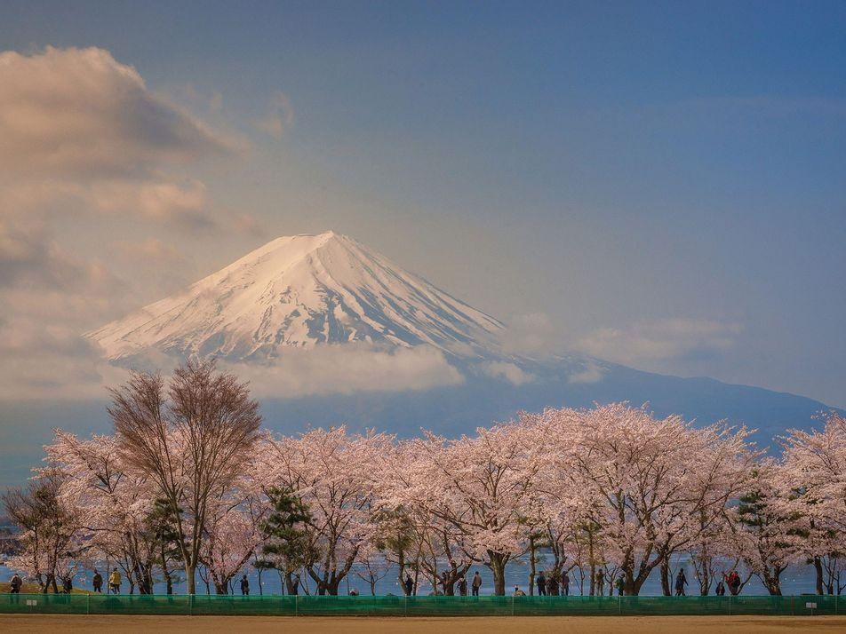25 Fotografias Maravilhosas de Flores de Cerejeira
