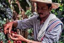 Don Fernando, um agricultor de Caquetá, continuou a produzir café apesar de viver numa região assolada ...