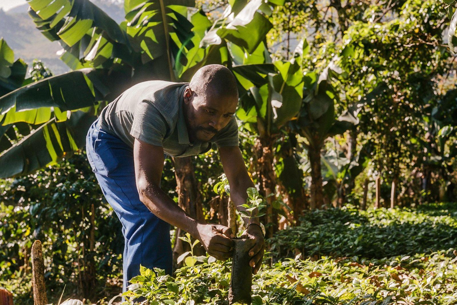 Zachariah Mukwinya, um agricultor da aldeia de Chavhanga, no distrito de Mutasa, observou um desenvolvimento enorme ...