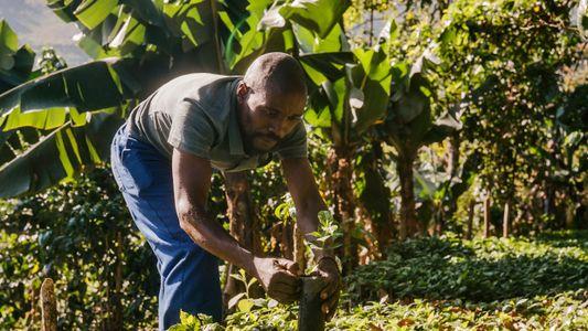 Produzir café para futuros brilhantes no Zimbabué
