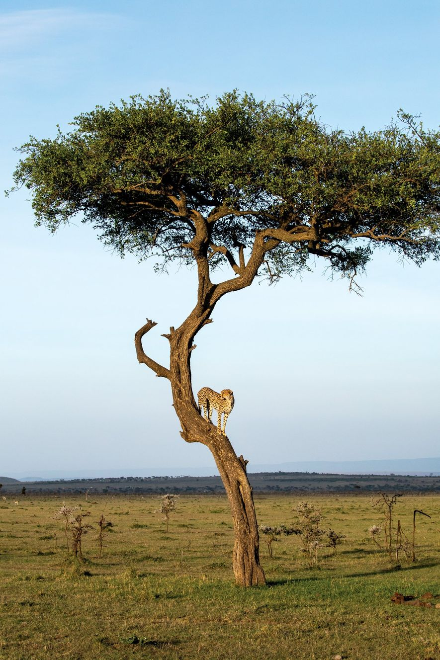 O Futuro dos Safaris em África - 2