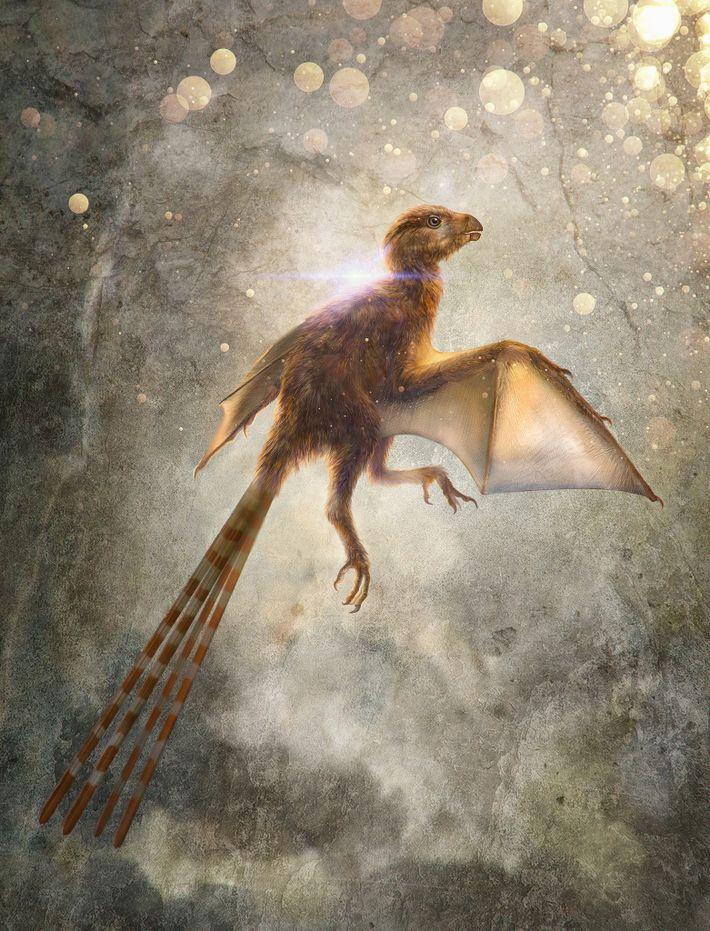 Esta ilustração descreve o Ambopteryx longibrachium, uma espécie recém-descoberta de dinossauros terópodes não-aviários que tinham asas ...