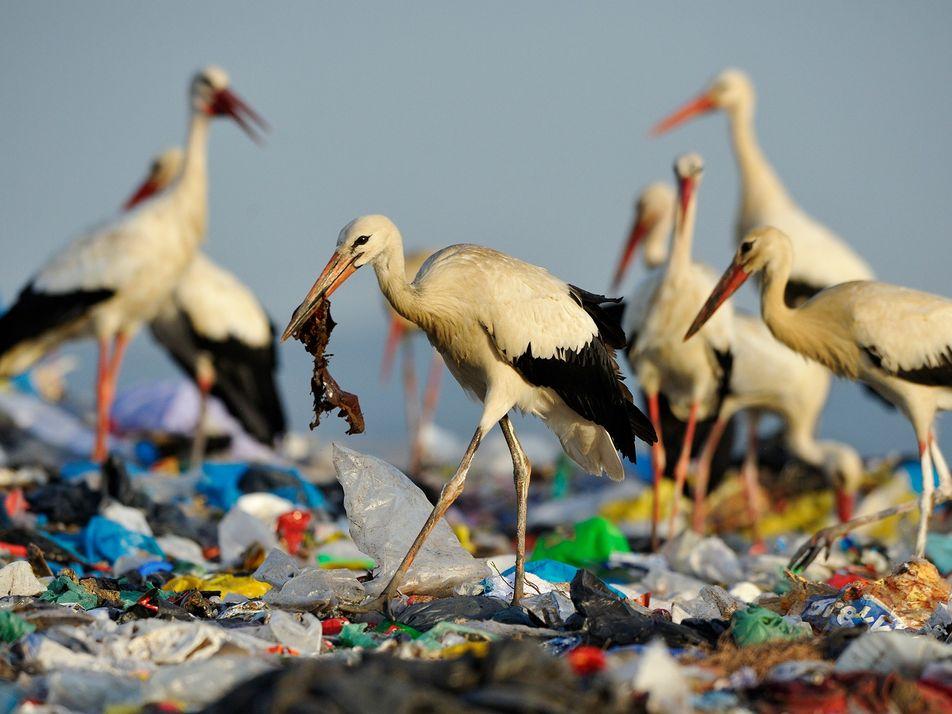 Porque Razão os Animais Marinhos Comem Plástico?