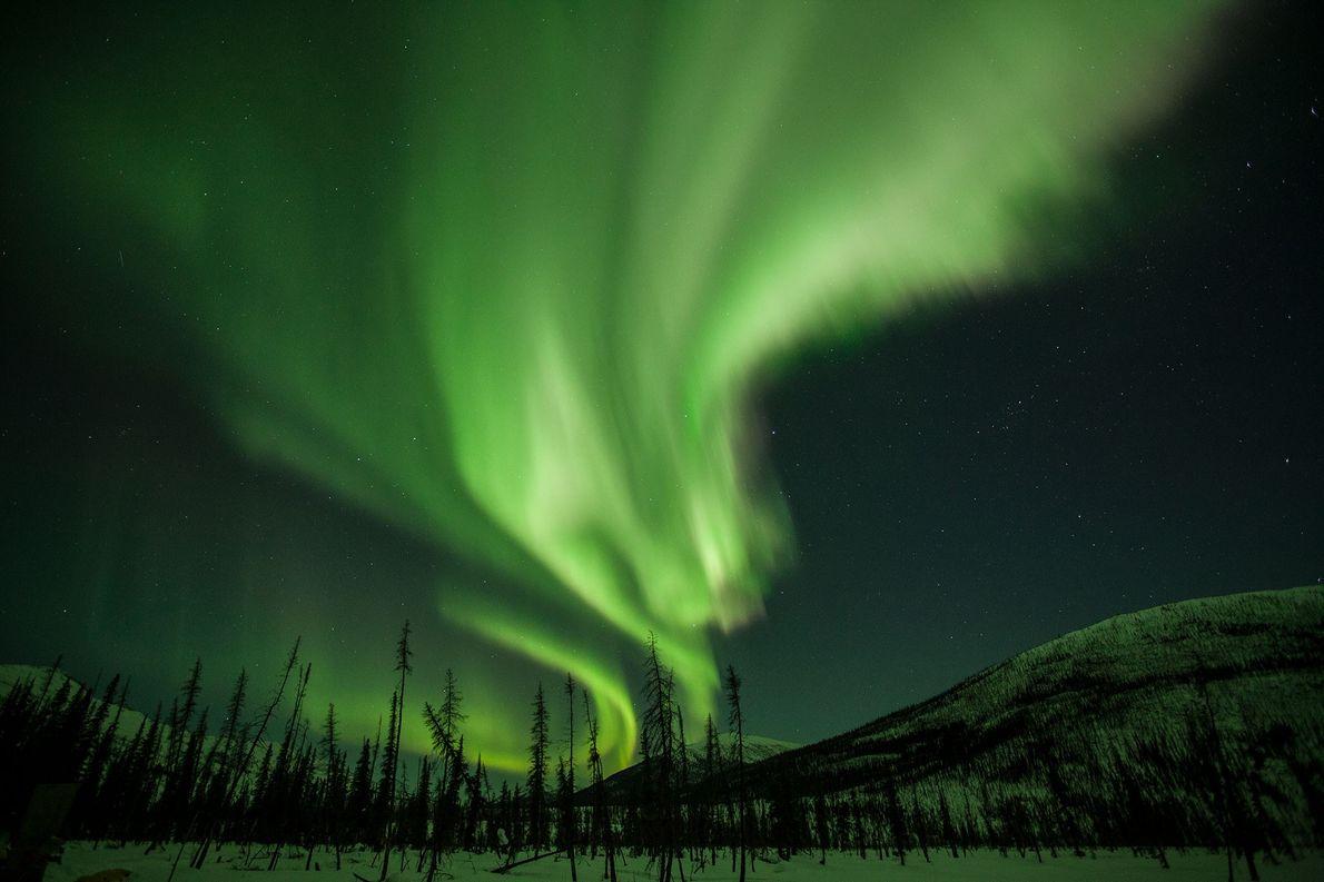 Brilhantes cortinas de luz adornam o céu noturno do Alasca. Conhecidas como aurora boreal, estas luzes …