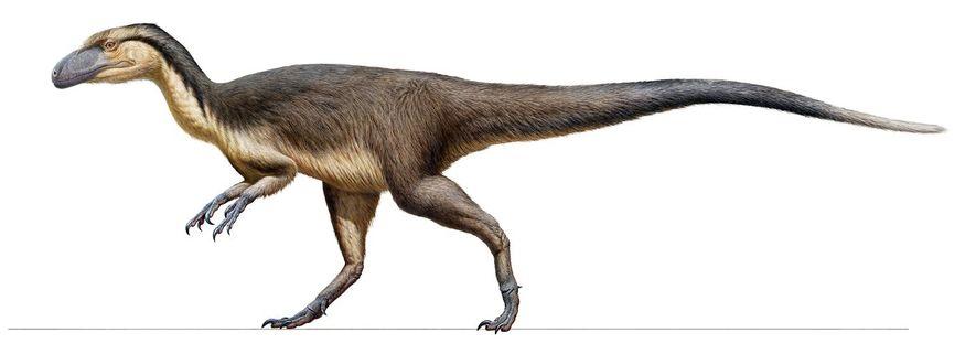 Um esconderijo de penas fossilizadas, encontradas na Austrália, fornece evidências sólidas de que pequenos dinossauros carnívoros, ...