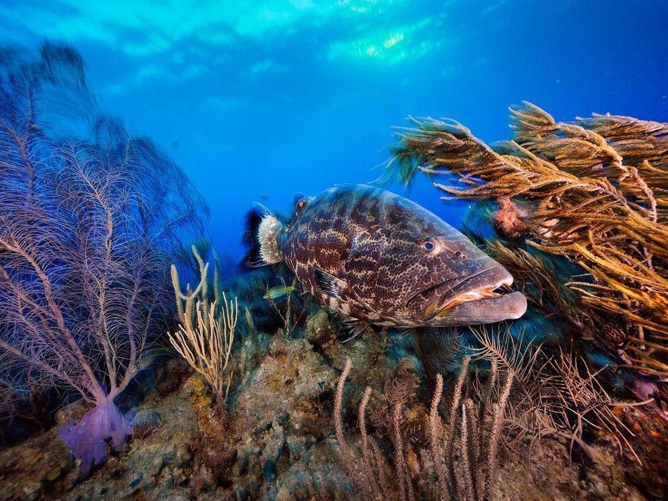 Belize Tenta Recuperar o Seu Oceano