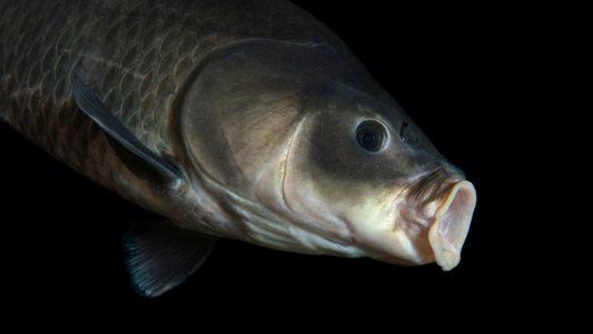 Peixe com 112 Anos Quebra Recorde de Longevidade