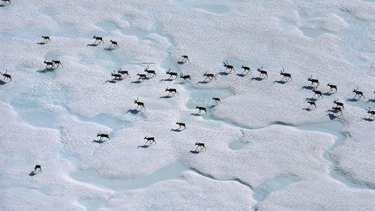 Uma Viagem de 4828 Quilómetros Revela as Maravilhas Naturais do Alasca, em Risco