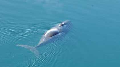 Estas Misteriosas Baleias Entoam Jazz no Oceano