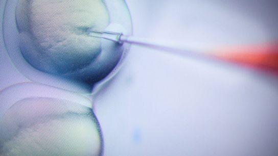 Um investigador manipula laboratorialmente uma amostra genética.