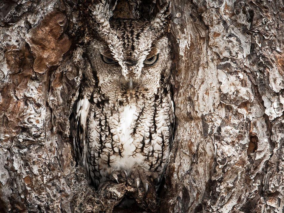 Tente Descobrir os Animais Camuflados Nestas Fotografias