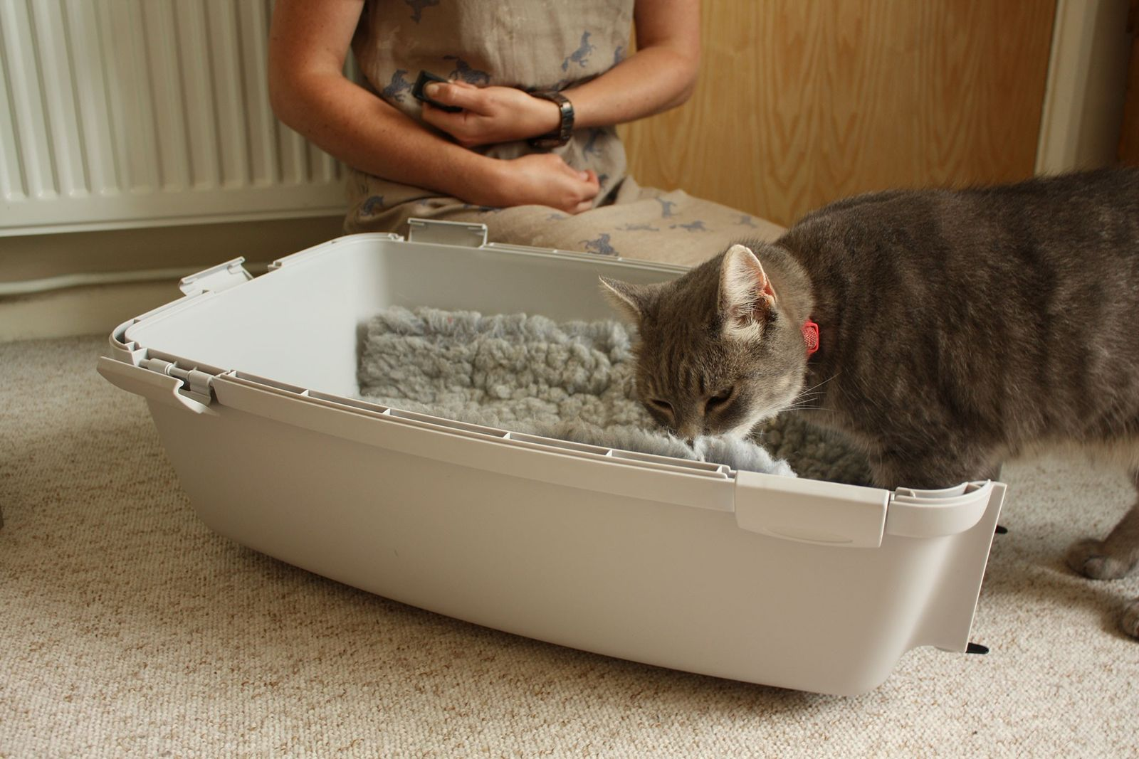 Estará a Treinar Bem o Seu Gato?