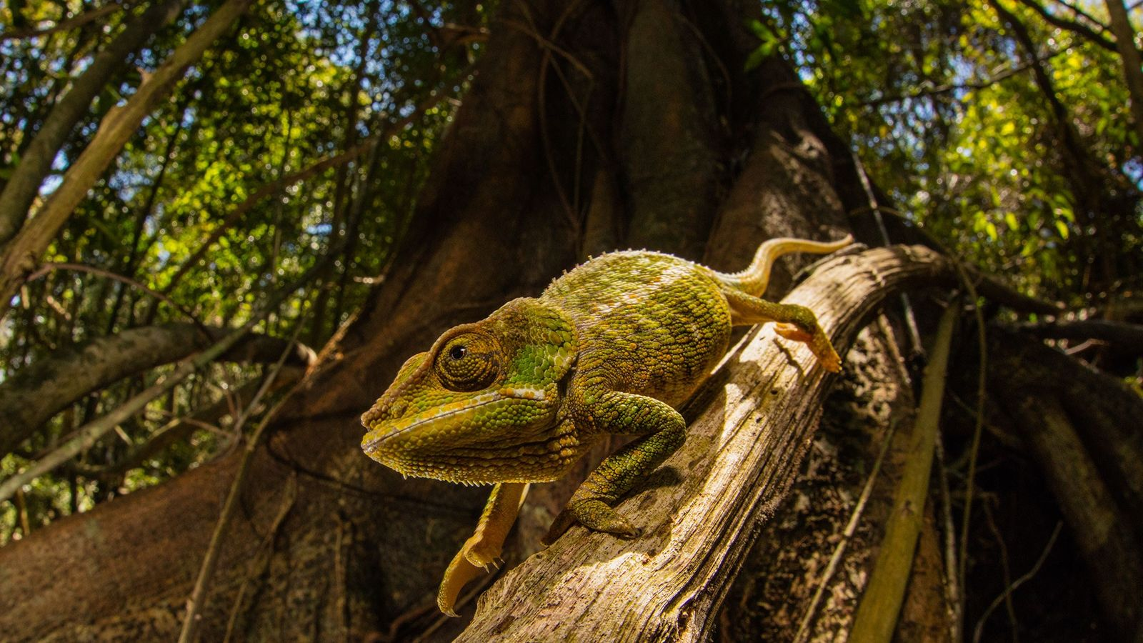 Chameleons can change skin color based on their surroundings. A new 'smart' skin, designed to use ...