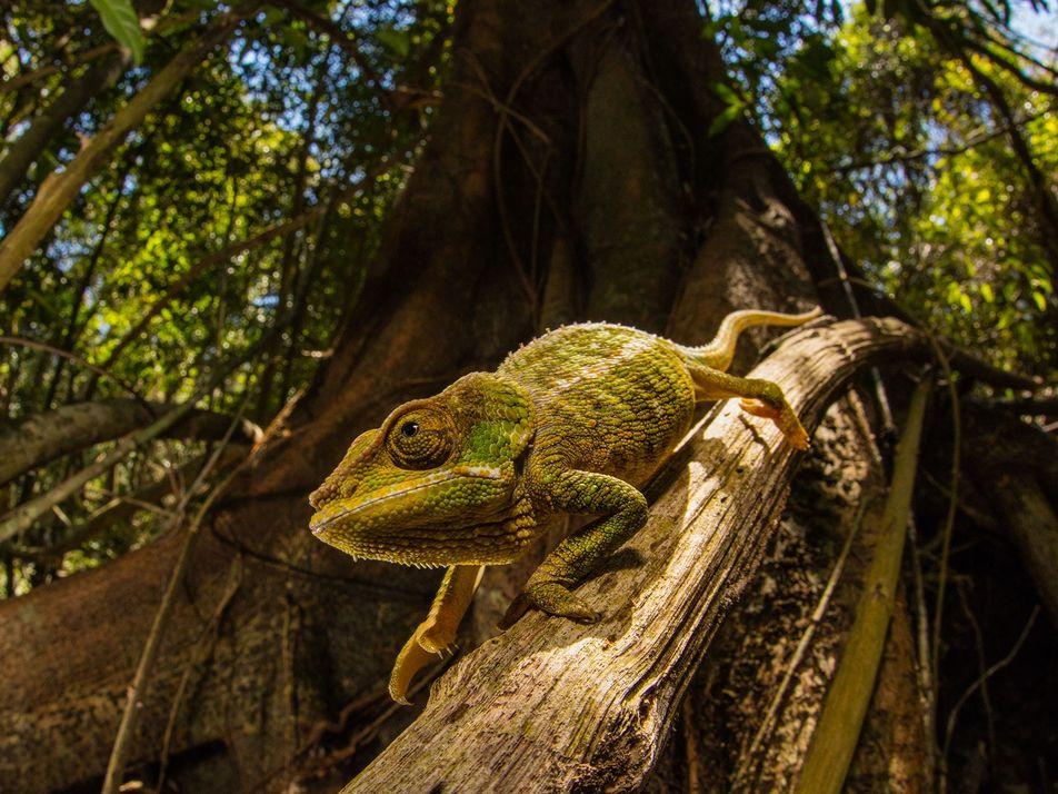 Novo Polímero 'Inteligente' Muda de Cor – Truque dos Camaleões
