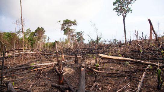 Clareiras abertas para a pecuária na floresta tropical ao longo da autoestrada Trans-Amazónica. Este tipo de ...