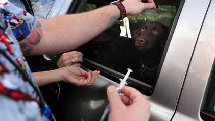 Não, a Gripe Canina Não Será a Próxima Pandemia Humana!