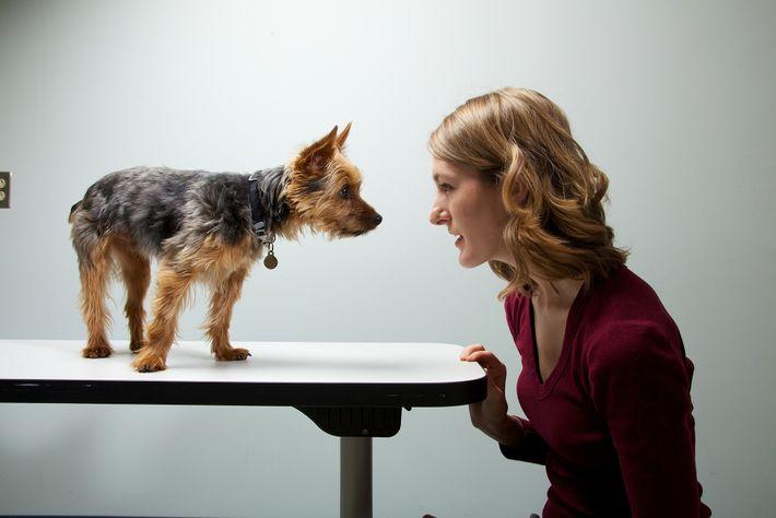 Investigadores estudaram as personalidades de 1681 cães e respetivos donos. Conclusão: os cães e as pessoas ...