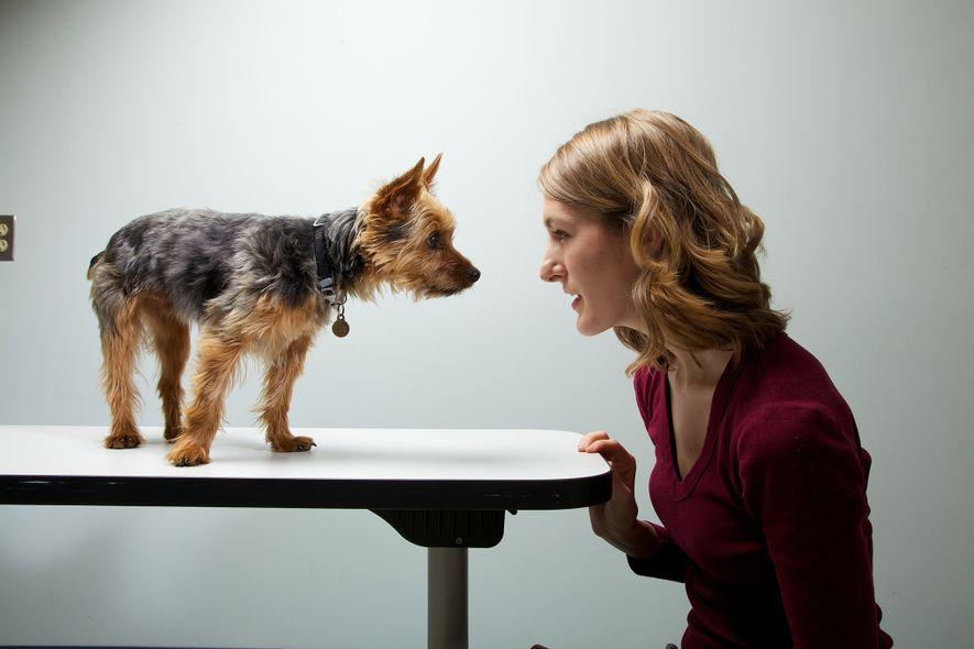 Donos Ansiosos Tornam os Seus Cães Ansiosos?