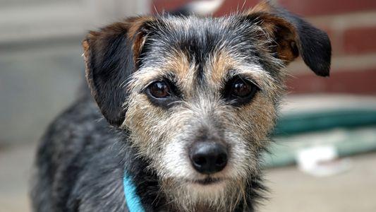 Cães Podem Ser 'Sistemas de Alerta Precoce' Para a Presença de Químicos Tóxicos em Casa
