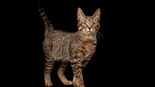 Fotografia de um gato