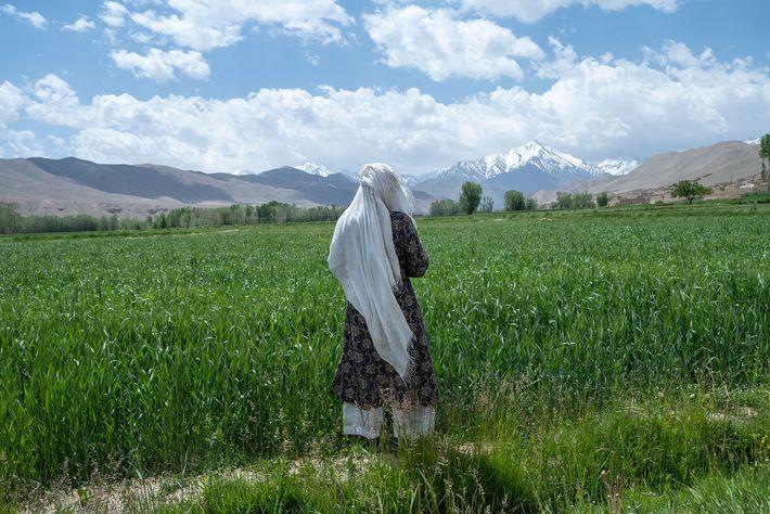 Uma mulher percorre os exuberantes campos de trigo e de batatas na província central de Bamiyan, ...