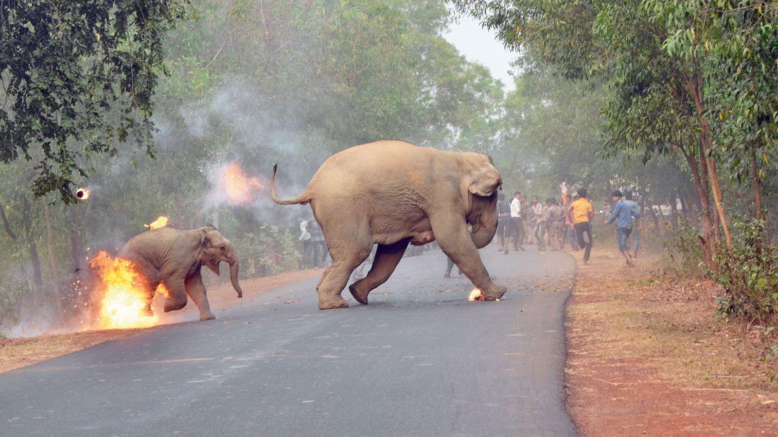 Dois elefantes-asiáticos fogem de uma multidão