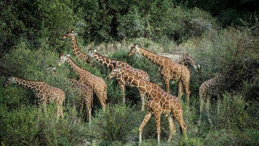 Fotografias do Animal Mais Alto do Mundo