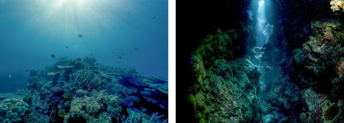Esquerda: A luz da tarde é filtrada até ao recife de Lodestone, na Grande Barreira de ...