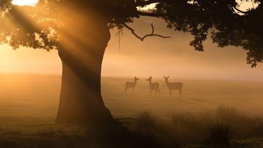 Apreciar a Natureza Através das Lentes do Confinamento