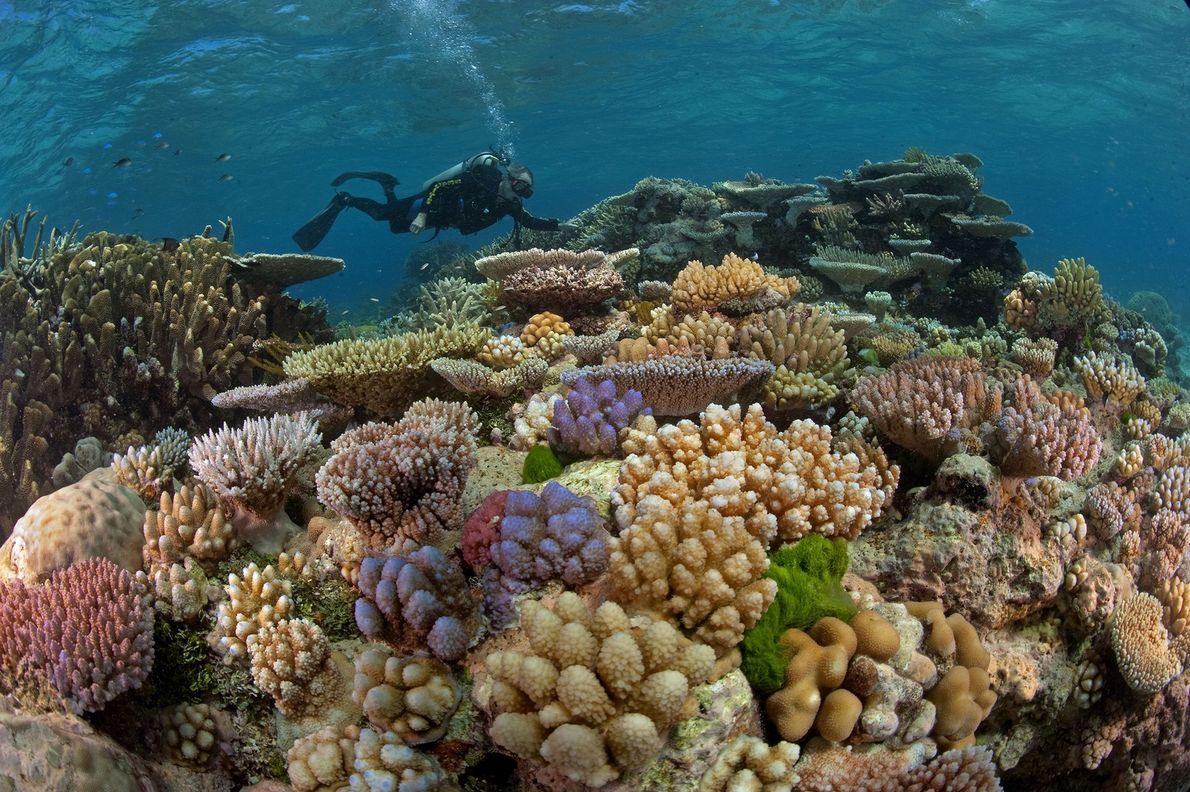 Grande Barreira de Coral ao largo da Austrália