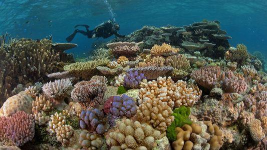 Podemos Perder os Recifes de Coral em 30 Anos