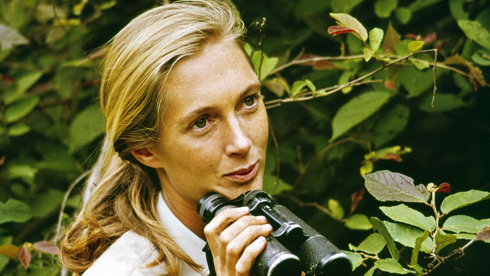 "Jane Goodall, em 1965, no filme ""Miss Goodall and the Wild Chimpanzees"""