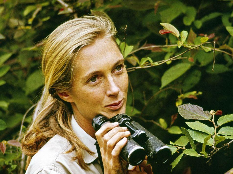 Jane Goodall: Como Uma Mulher Redefiniu a Humanidade