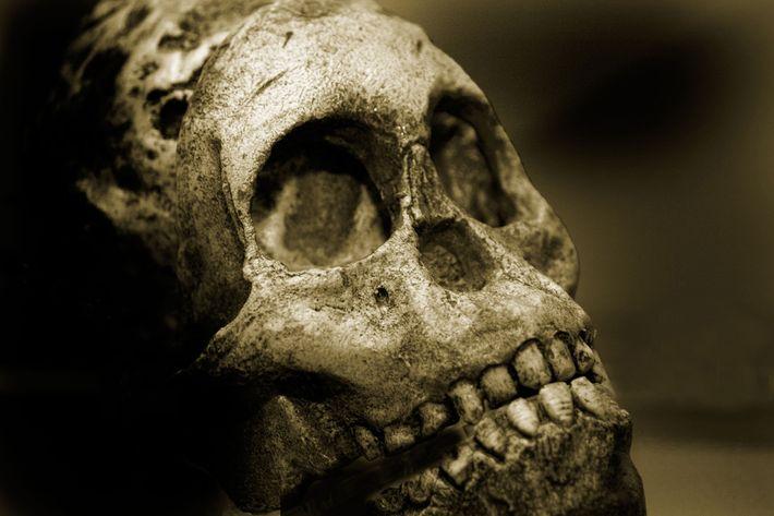 crânio de um Neandertal masculino.
