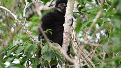 Novas Espécies de Macacos Escondidas à Vista de Todos