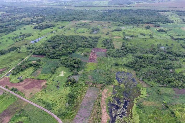 """Esta imagem aérea de Aguada Fénix, sem a tecnologia LiDAR, mostra como o monumento """"se esconde"""" ..."""