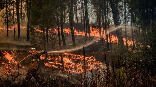 Como Viver com Grandes Incêndios? Florestas Portuguesas Podem Ajudar a Responder