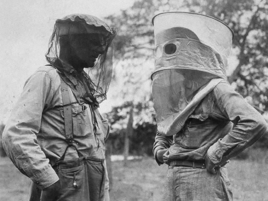 A Luta Contra as Picadas de Mosquitos ao Longo do Tempo