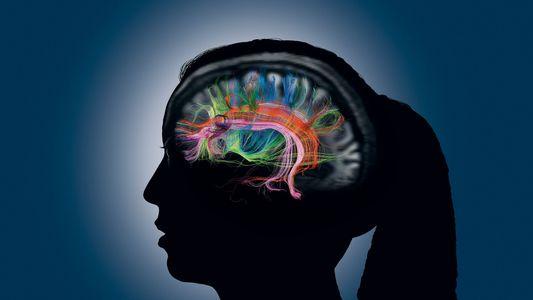 Memória Humana: Como Criamos, Lembramos e Esquecemos Memórias