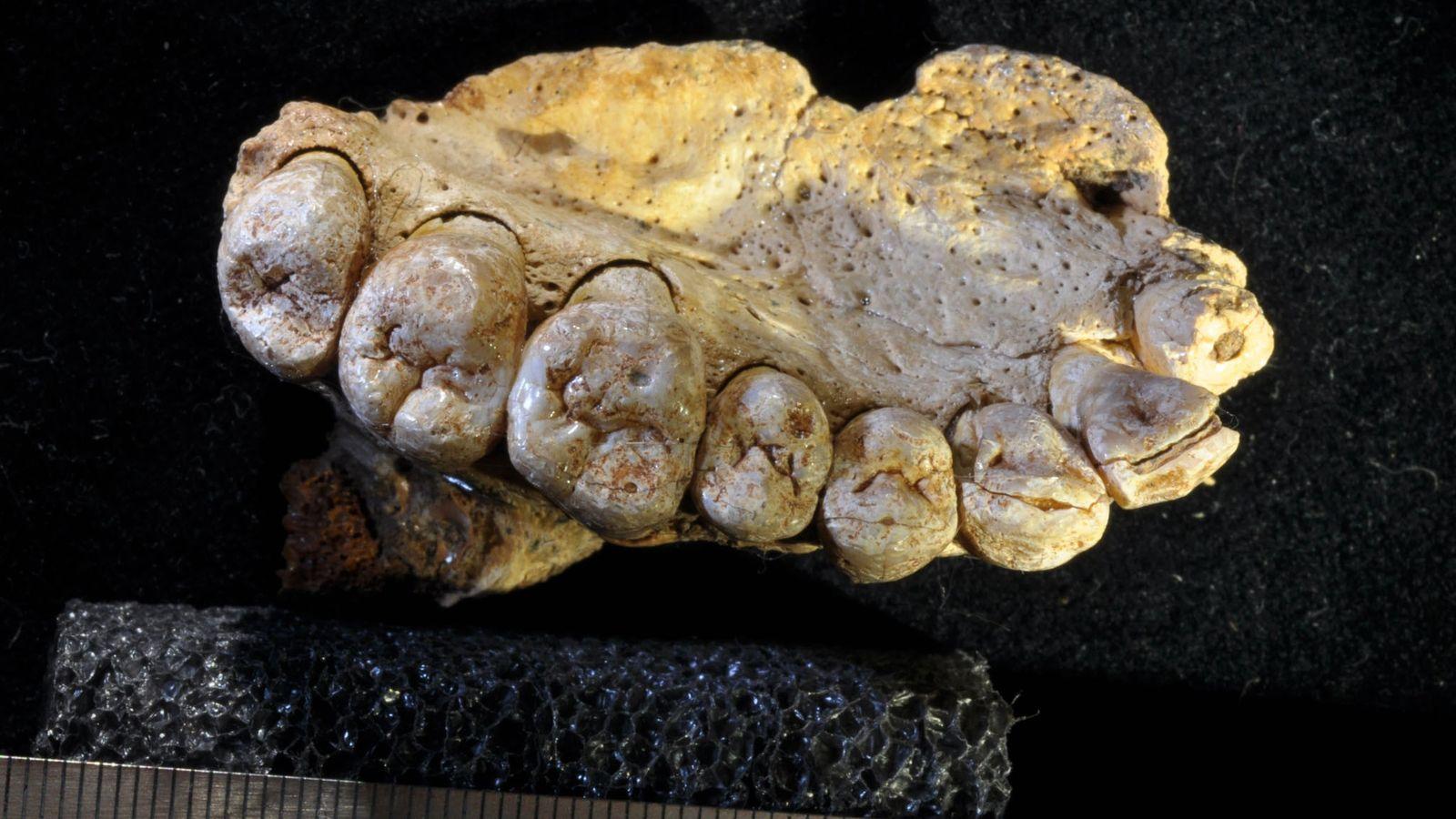 Mandíbula fossilizada encontrada em Israel
