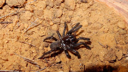 Aranha número 16