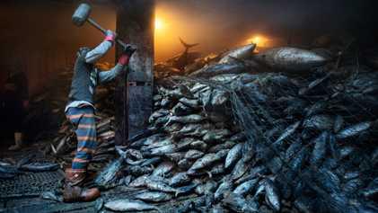 O Mar Está a Ficar Sem Peixe – Apesar das Promessas de Proteção das Nações