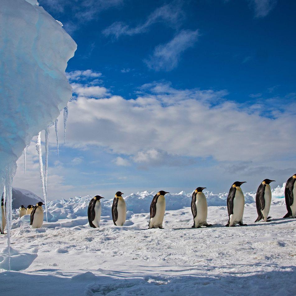Mitos Polares: os Pinguins Não Vivem no Polo Sul