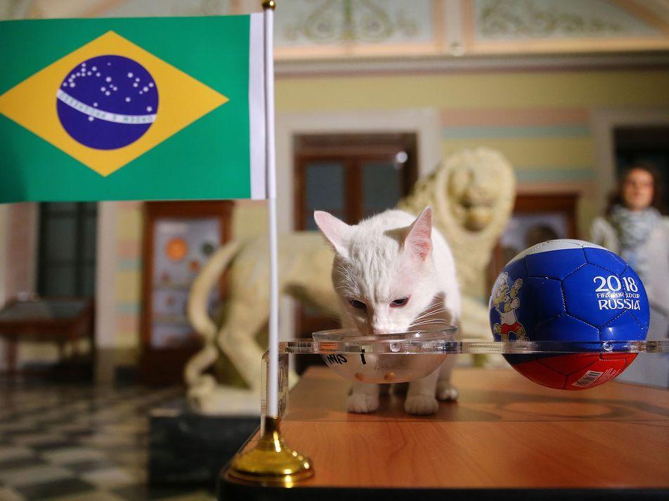 A Ciência Por Detrás da Psique dos Animais Que Preveem os Resultados do Mundial de Futebol