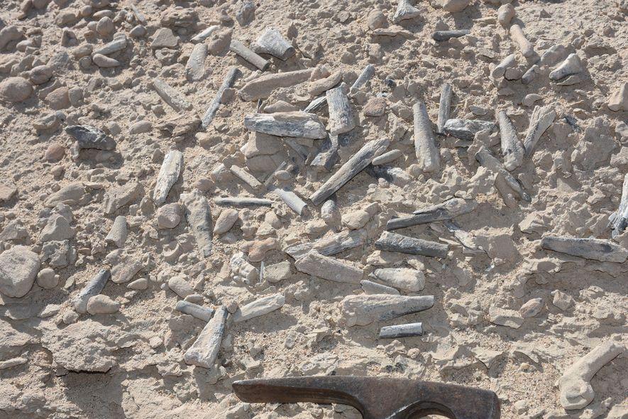 O local onde foram encontrados os fósseis de Hamipterus, situado na região de Xinjiang, no noroeste ...