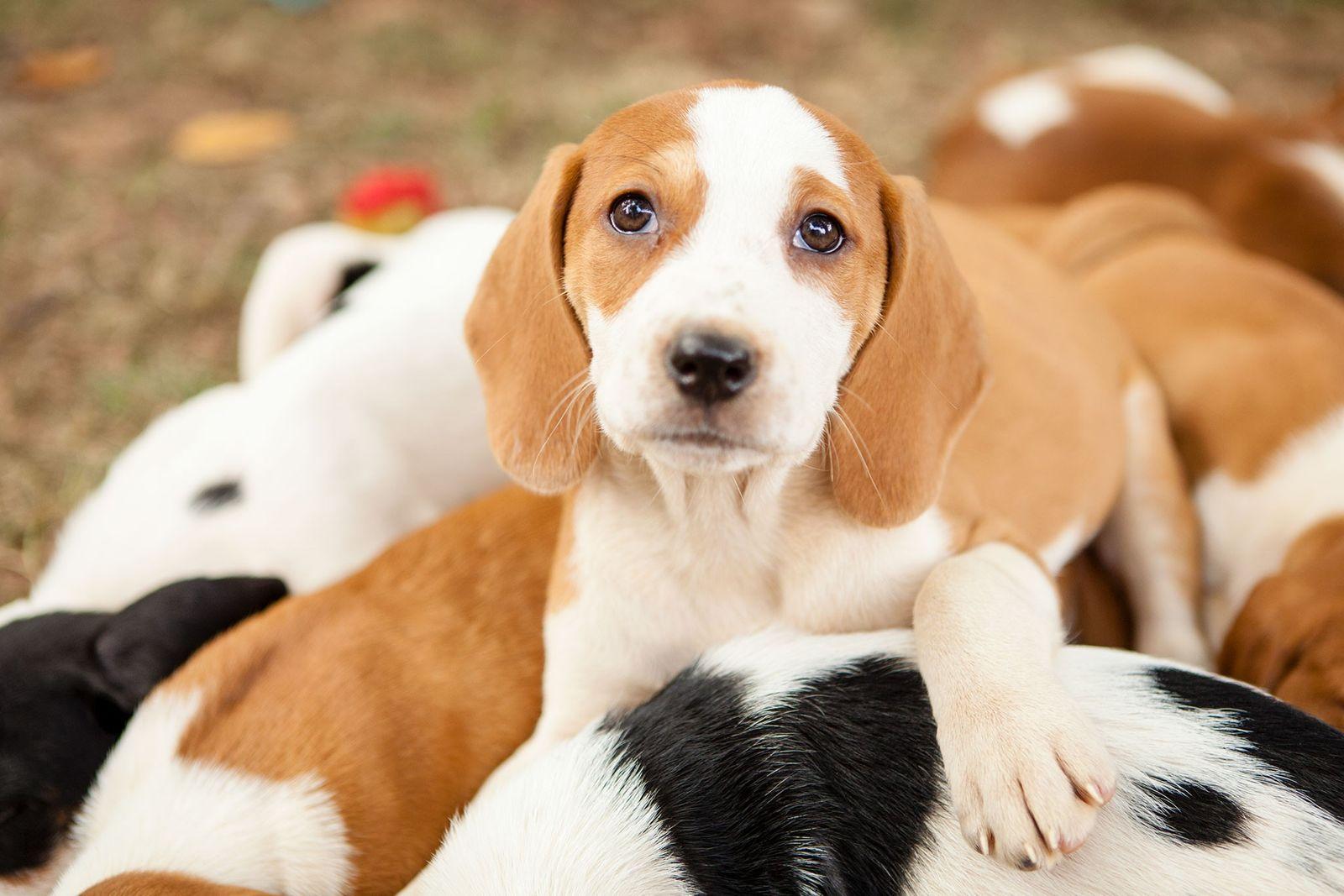Cachorros para adoção brincam no pátio.