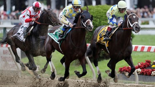 Os cavalos de corrida – como os que vemos nesta imagem a competir na Preakness Stakes ...