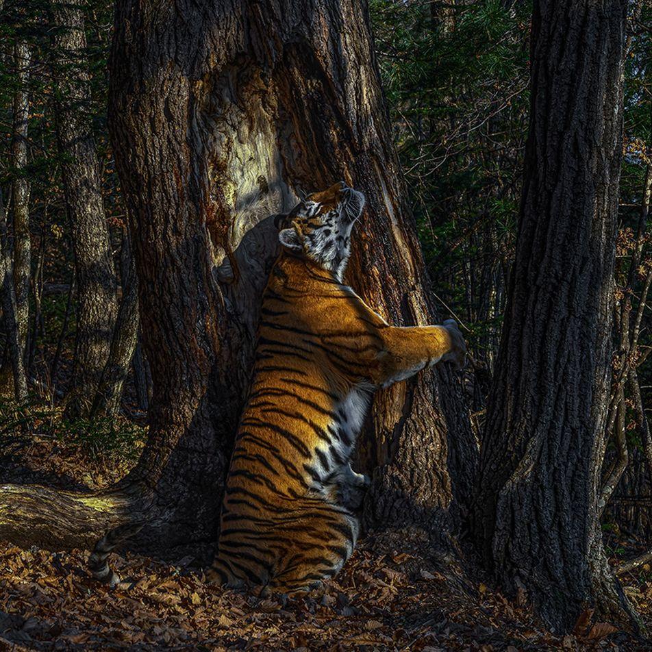 Veja as Melhores Fotografias de Vida Selvagem de 2020