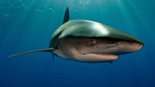Factos sobre Tubarões