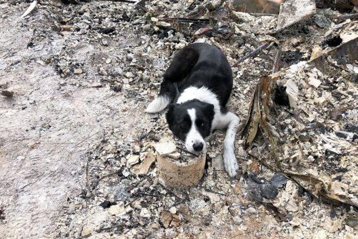 Piper, uma border collie do Institute for Canine Forensics, avisa o seu tratador que encontrou os ...